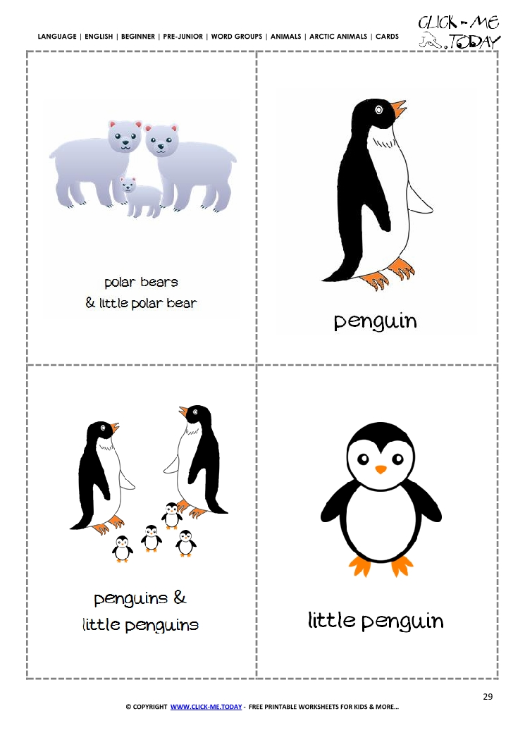 graphic relating to Printable Animal Flash Cards named Free of charge Printable Arctic Pets Flashcards Polar Go through, Penguin