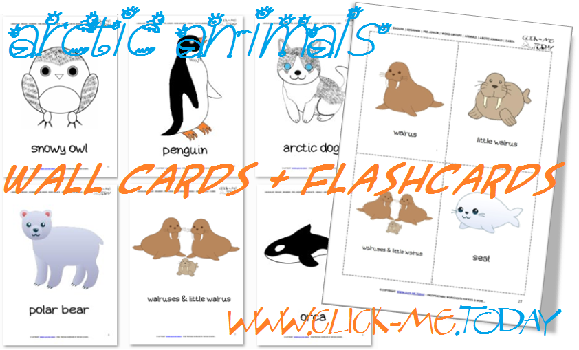Free Printable Arctic Animals Flashcards
