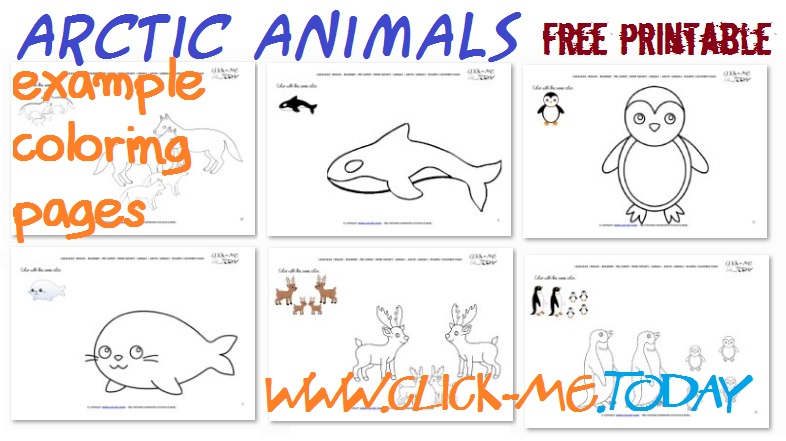 arctic animals coloring pages  Coloring Pages