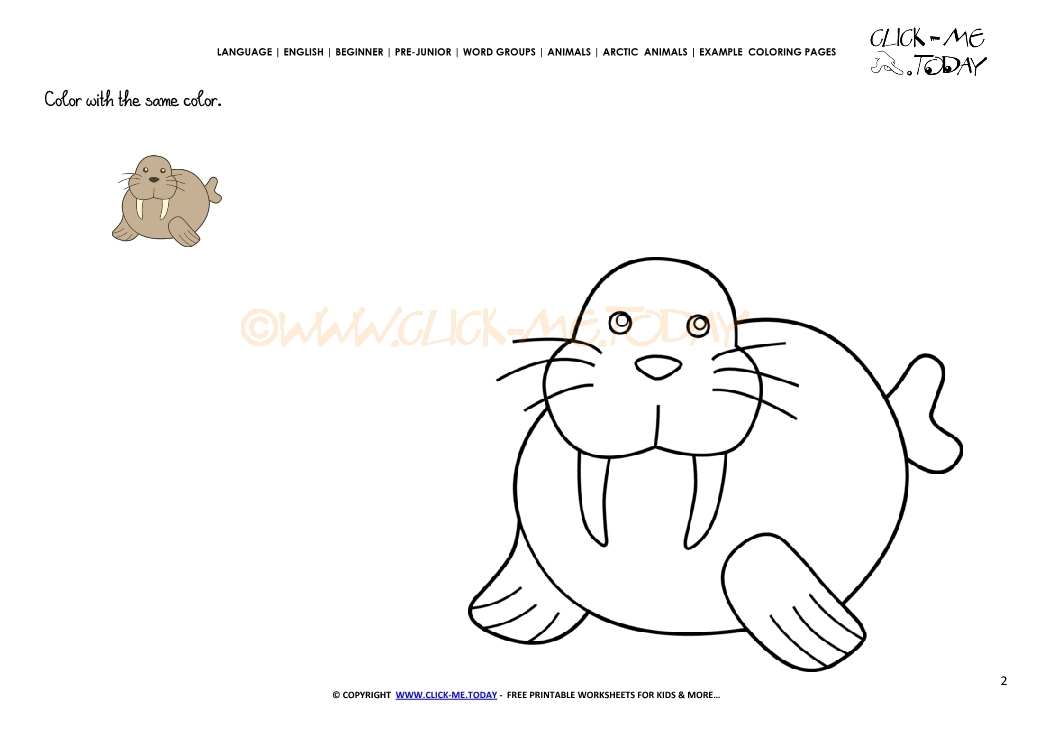 Example coloring page Little Walrus - Color picture of Walrus