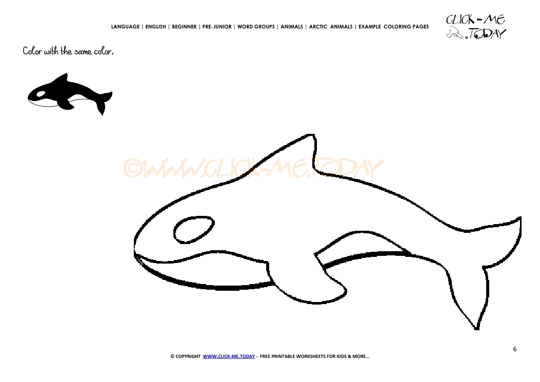 Example Coloring Orca Color
