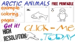 Free printable Arctic Animals Example Coloring Pages