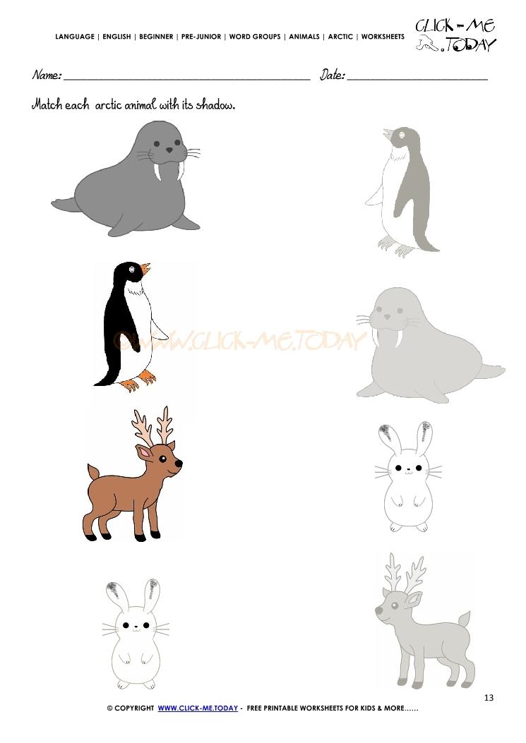 Arctic Animals Worksheet Activity