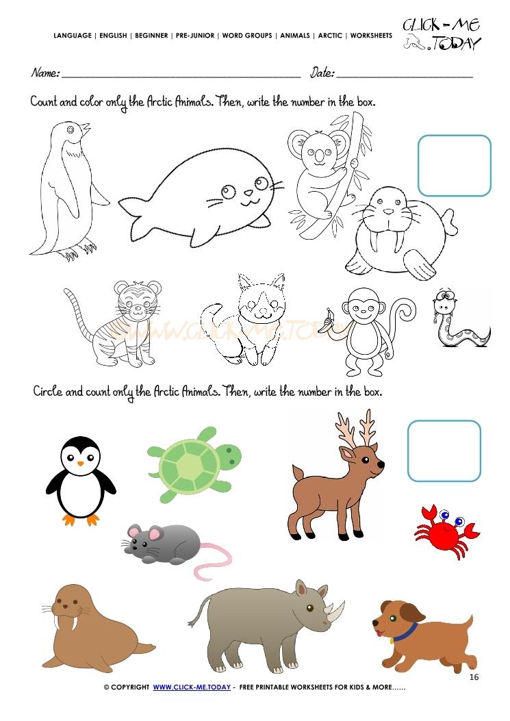 Arctic Animals Worksheet Activity Sheet Count 2