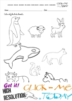 Arctic Animals Worksheet - Activity sheet Color 2