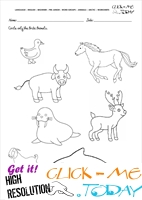Arctic Animals Worksheet - Activity sheet Circle 2