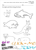 Arctic Animals Worksheet - Activity sheet Color 3