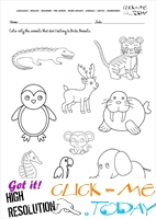 Arctic Animals Worksheet - Activity sheet Color 4