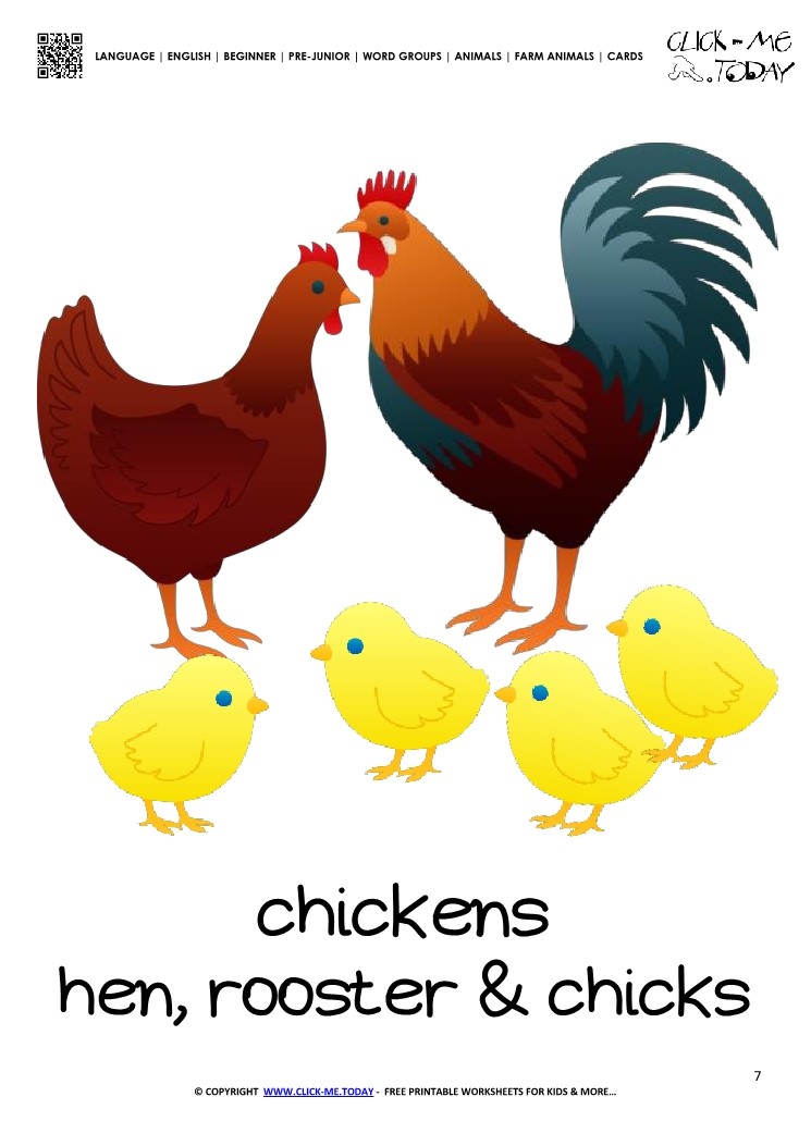 Farm animal flashcard Chickens Printable card of Chickens