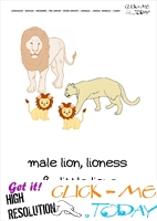 Jungle animal flashcard Lions - Printable card of Lions