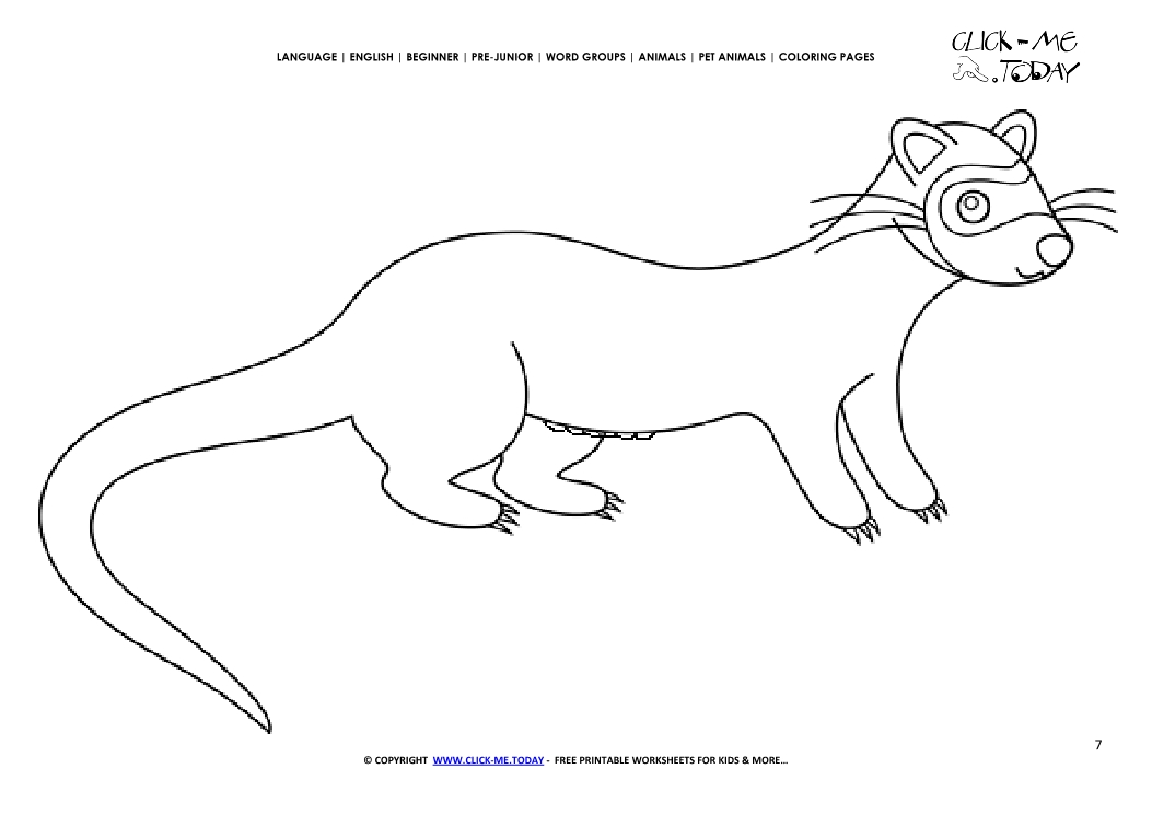 Coloring page Female Ferret - Color picture of Ferret